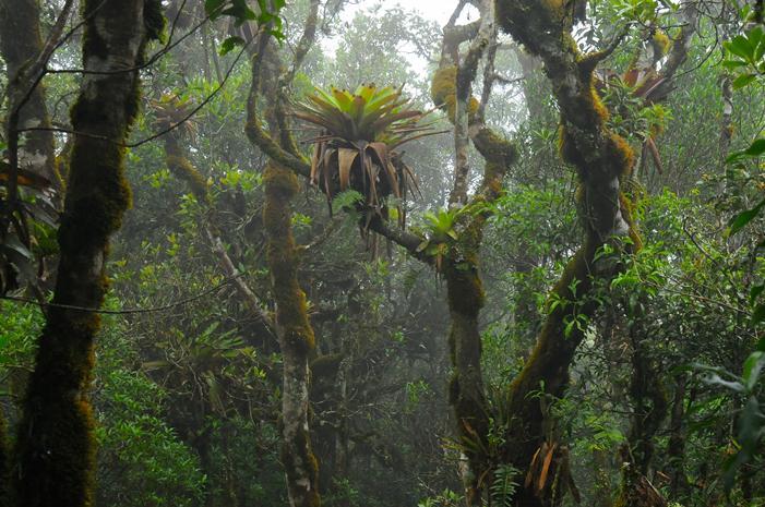 tropical montane cloud forest pic