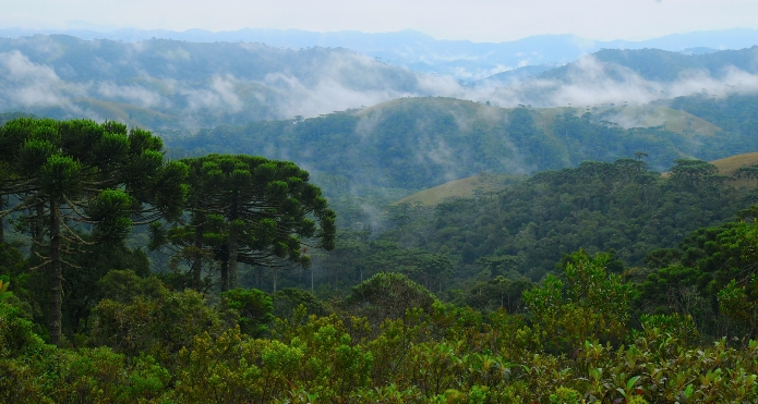 Tropical montane cloud forest photo.
