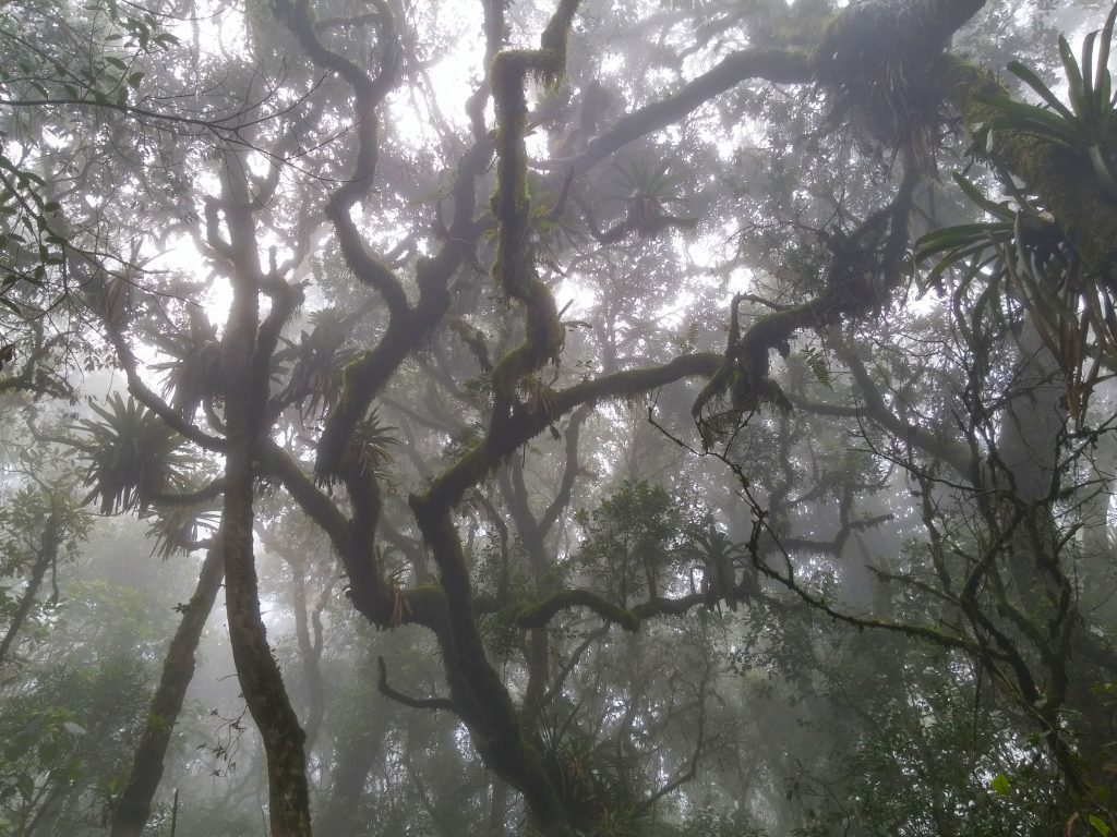 A look inside the cloud forest canopy on a foggy day. Photograph: Rafael Oliveira.
