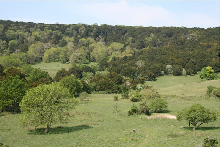 Figure 1 from Gilliam (2016): Kingley Vale, West Sussex, England. Photo credit: David D. Williams