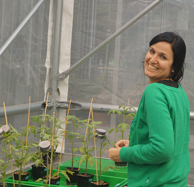Image: First author Ainhoa Martínez-Medina in the greenhouse with experimental tomato plants.