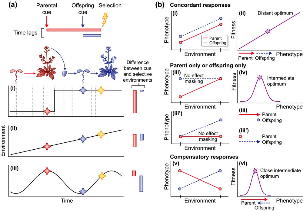 Image: Figure 1 from Auge, G., et al.