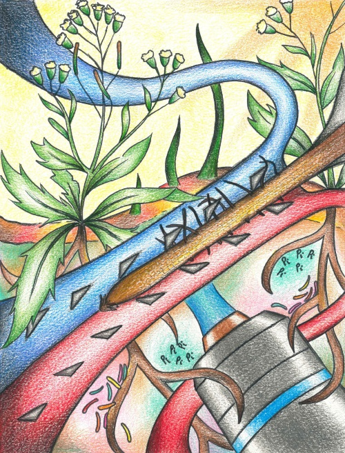 Image: The dual-flow-RootChip, a microfluidic platform for investigating root nutrition, signalling and development in heterogeneous environments. Artwork by Dr Claire E. Stanley.