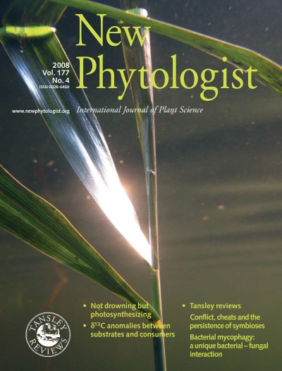 Image: This isn't the first time Ole Pedersen's research has been featured on the cover. New Phytologist 177:4 – Silvery gas films on leaves of submerged Phragmites australis, courtesy of Ole Pedersen.