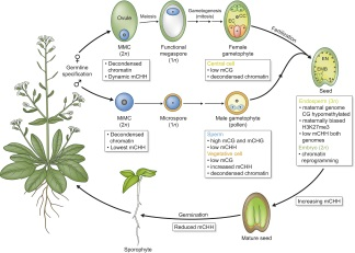 New Phytologist - Wiley Online Library