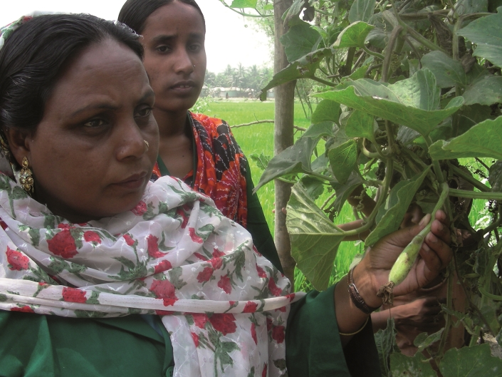 Workers in Bangladesh assess their gourd crop for pests. New research suggests the abundance of crop pests in developing countries may be greatly underestimated, posing a significant threat to some of the world's most important food producing nations.