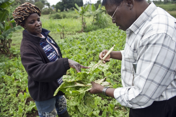Kale growers in Kenya assess their crop for pests. New research shows the abundance of crop pests in developing countries may be greatly underestimated, posing a significant threat to some of the world's most important food producing nations.