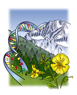 Ecological and Evolutionary Genomics of Plant Adaptation