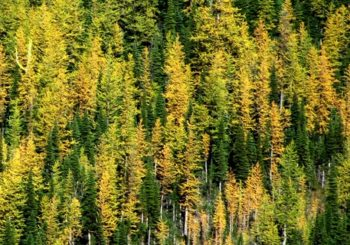 Climbing up to keep cool – Climate change effects on mountain ecosystems