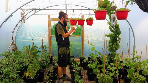 A researcher recording data about plants growing in a polytunnel, on a paper pad.