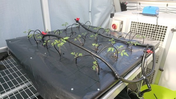 A black plastic aquaponics system with small plants protruding.