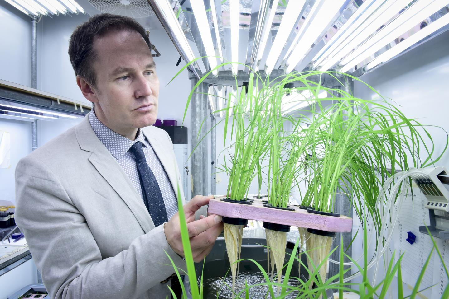 "U of T Scarborough Professor Herbert Kronzucker has helped identify ""superstar"" varities of rice that can reduce fertilizer loss and cut down on environmental pollution in the process (Photo by Ken Jones)"