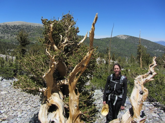Barbara Bentz poses with a bristlecone pine in this undated photo from field research conducted during the summer of 2014