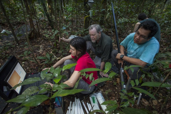 Image: Rich Norby and colleagues conducting fieldwork in the tropics